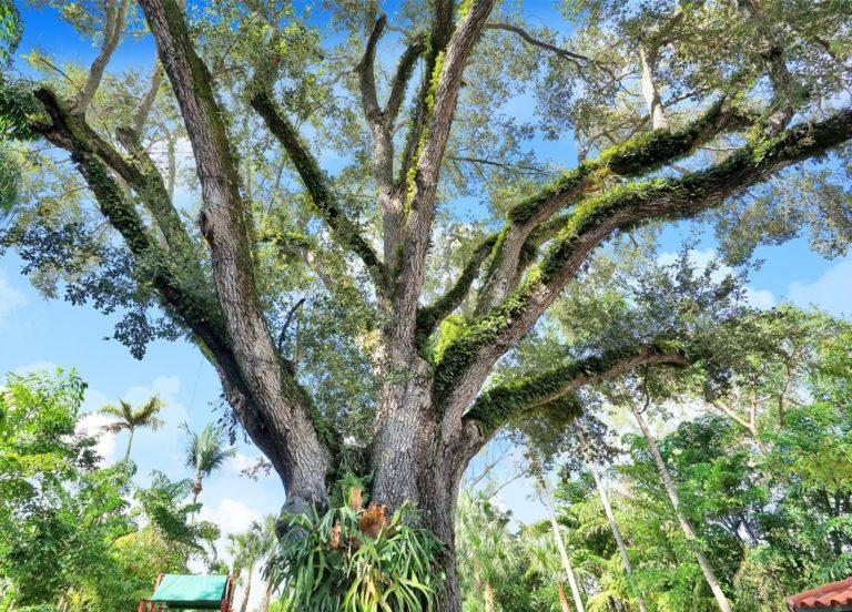 Palm Miami photo10