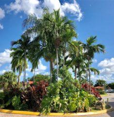 Doral Gardens photo11