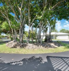 Pine Tree Estates photo17